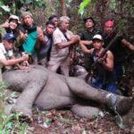 Seekor Gajah terluka Karena Sengaja Dijerat
