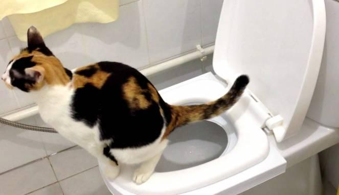 Melatih Kucing Memerlukan Kesabaran yang Cukup Besar
