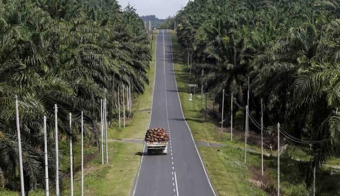 Parlemen Eropa Menyatakan Ketentukan Melarang Minyak Sawit Membuat Indonesia Kaget