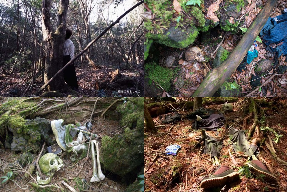 Hasil gambar untuk mayat di hutan aokigahara