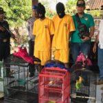 2 Pemuda Ditangkap Polisi Karena Nekat Mencuri Burung