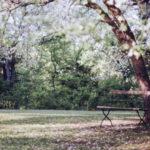 Bersantai di Taman Sebentar Bisa Bikin Bahagia