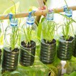 Tips Melakukan Urban Farming di Rumah