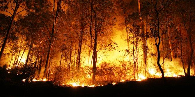 Kebakaran Lahan Di Riau Mencapai 124 Hektar