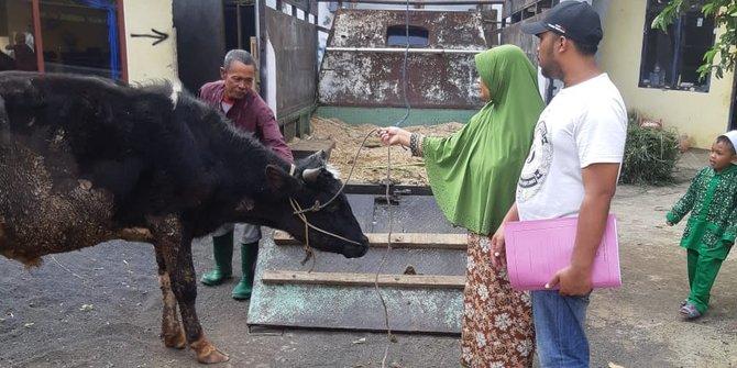 Pemilik Ternak Kaget Sapinya Dijual Menantu Sendiri Tanpa Sepengetahuanya