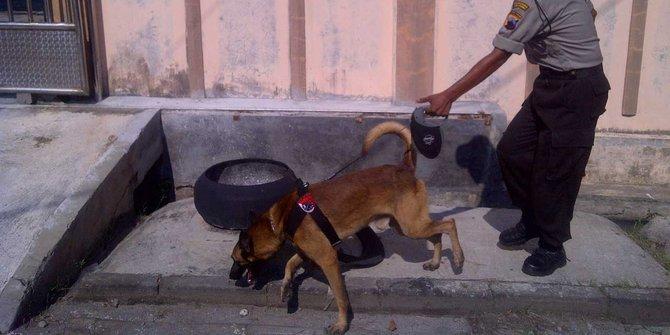 Polisi Terjunkan Anjing Pelacak Untuk Buru Pembunuhan Di Pangaribuan