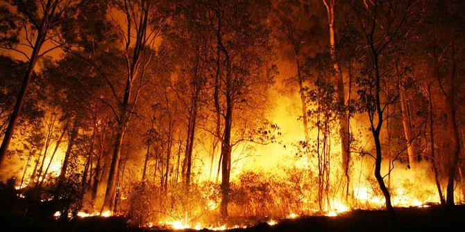 Sepekan Di 2019 Kebakaran Lahan Di Riau Capai 66 Hektare