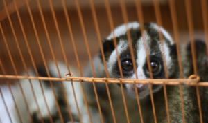 Hukuman untuk Pemburu Satwa Liar Dinilai Kurang Berat