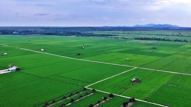 Perpres Tentang Lahan Pertanian Pangan Tengah Dipersiapkan oleh Pemerintah
